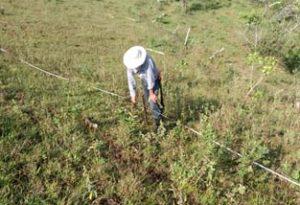 Abel Ceron (Guardian del BsT) Haciendo mediciones para iniciar implementación. Predio El Porvenir. Vereda El Limonar. Dagua -Valle del Cauca.